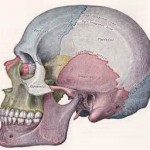 Skull Reshaping Areas Dr Barry Eppley Indianapolis